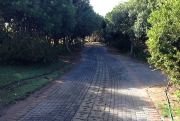 brick stone pathway curve trees forest